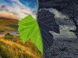 Fördelar och nackdelar med biobränslen